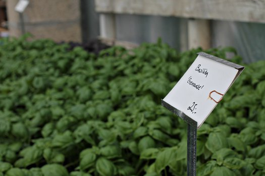 Växthus För Balkong : När man par gurkplantor och annat grönt den enarmade banditen