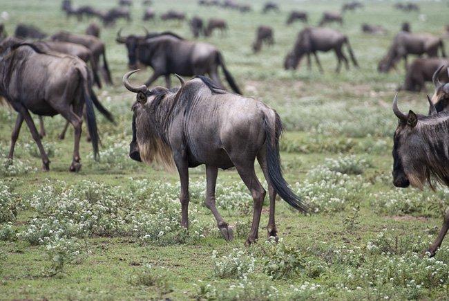 serengeti 002