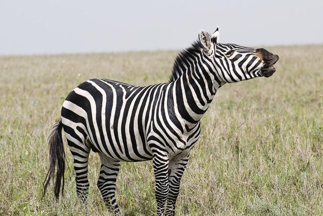 serengeti 035
