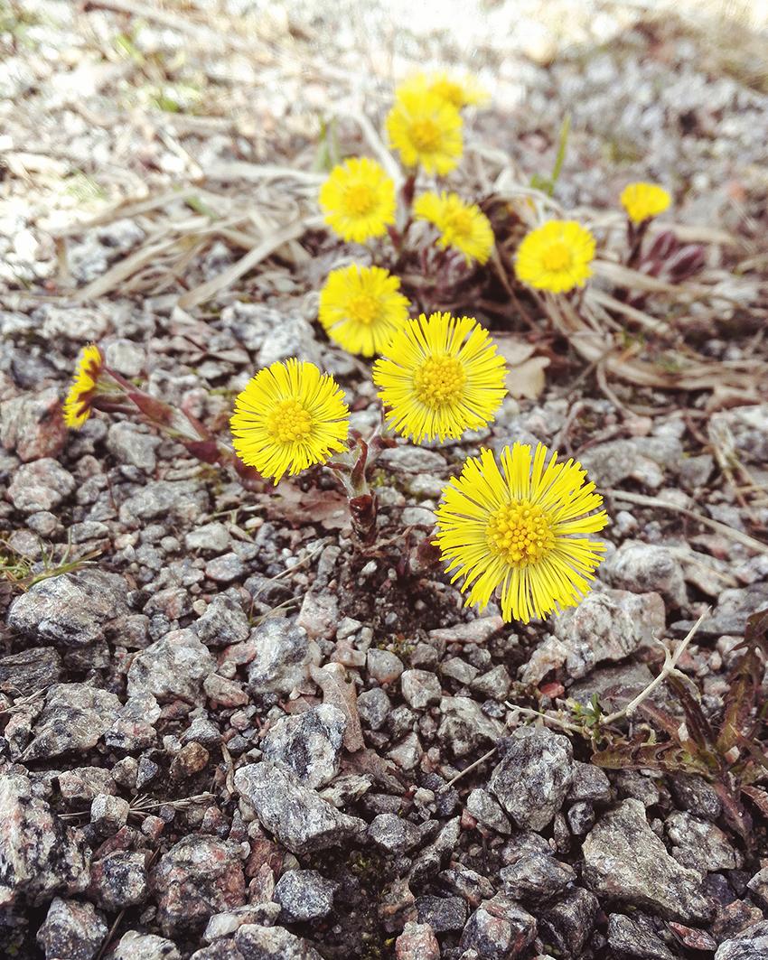 spring 003