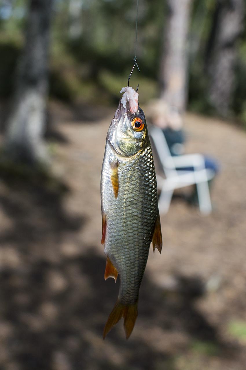 fiske 013